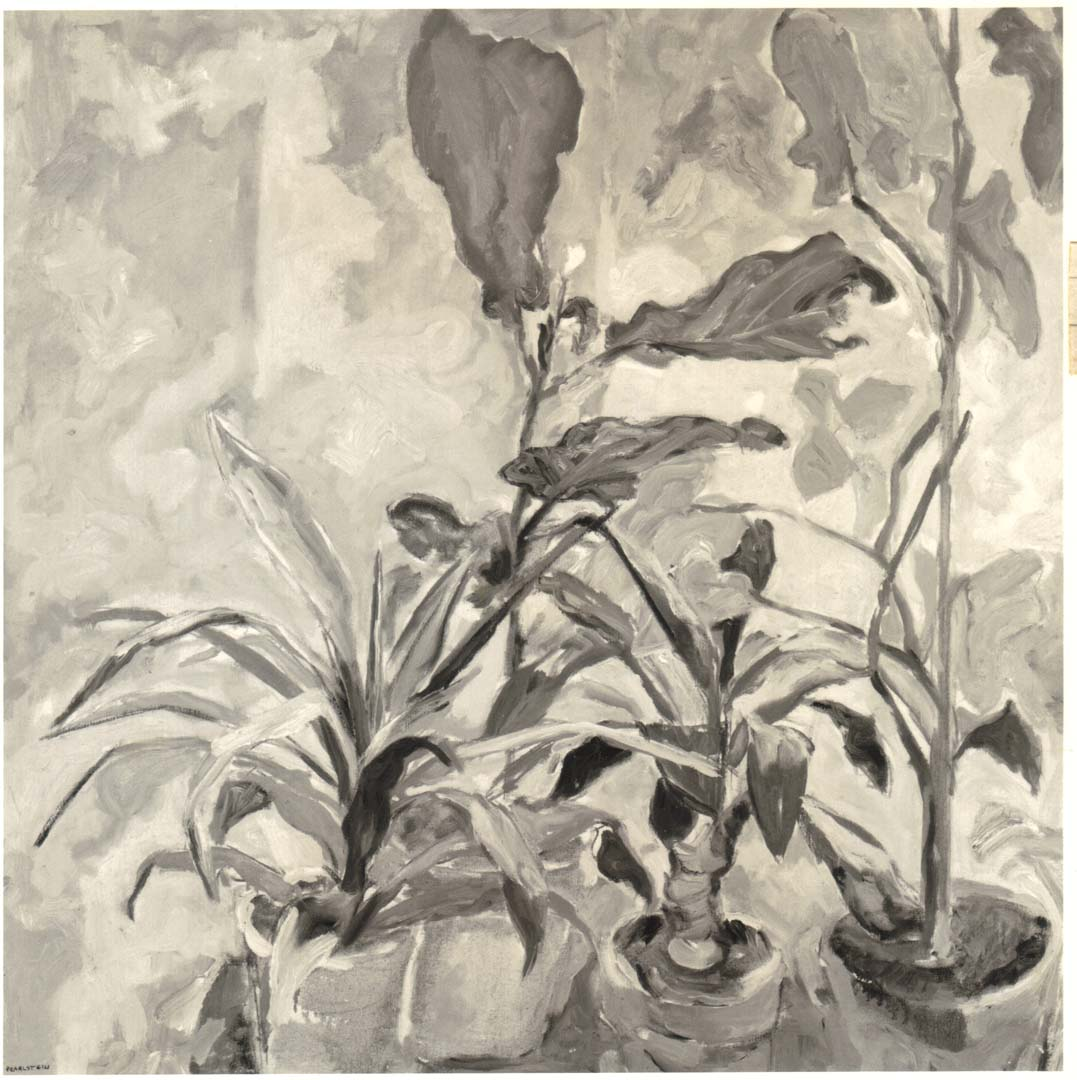 "1951 Plants Oil on Canvas 28"" x 28"""