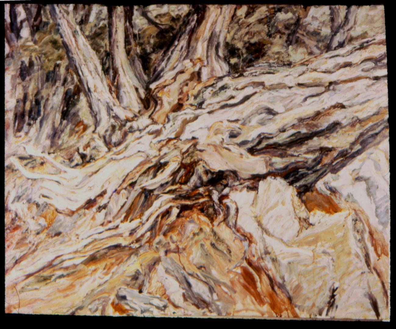 "1957 Roots (Fallen Tree) Oil on Canvas 36"" x 44"""