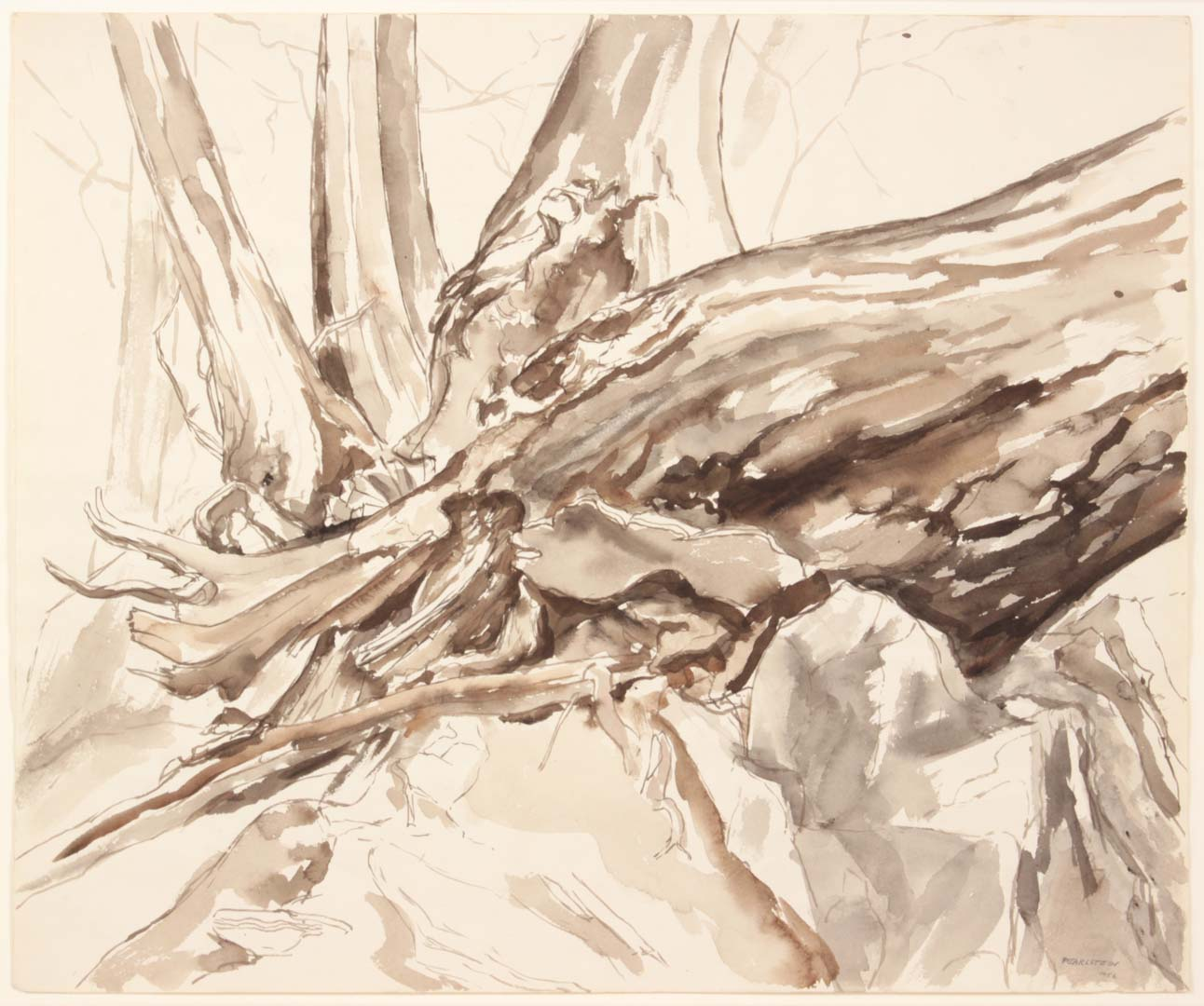 1956 Study for Oil Painting Fallen Tree Watercolor on Paper 18 x 21.5
