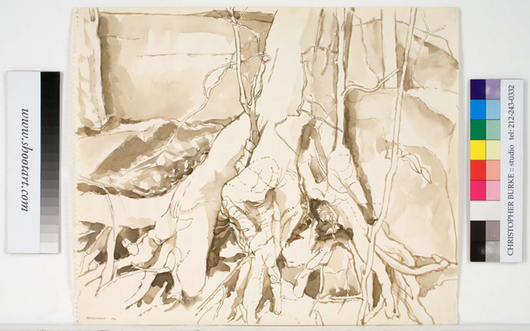 1959 Tree Roots Clutching Sepia Wash on Paper 13.875 x 16.75