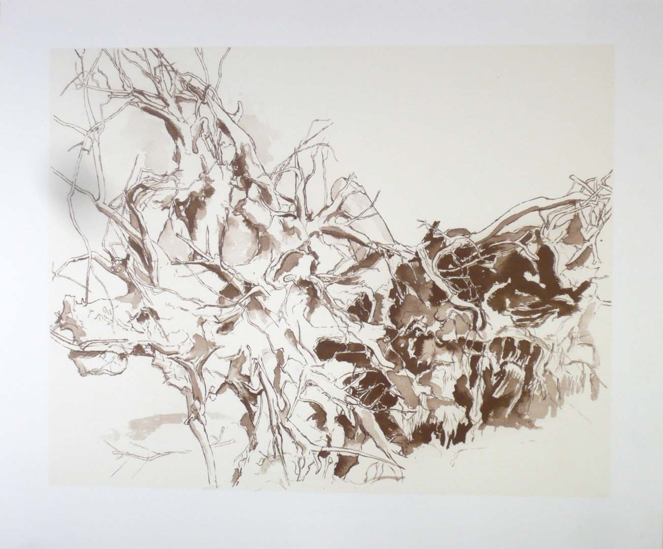 2011 Uprooted Tree #2 Lithograph on Paper 20.5 x 24.5